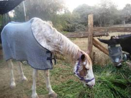 Sinbad - a horse recently rescued by ToL